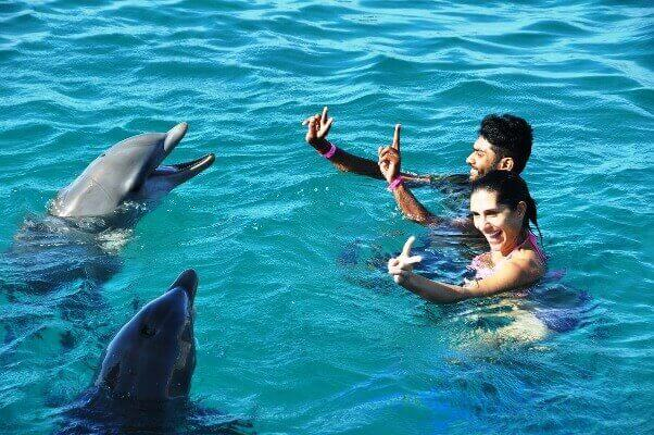 Image of can you swim with dolphins while pregnant